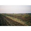 Hymor Schwarzer Knoblauch geschält 3x 1kg Spanien Garlic 90 Tage fermentiert